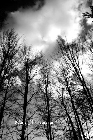 Winter Decor, Black and White, Modern, Halloween, Fall,  Tree Black, Woodland,  - 8x10 Print