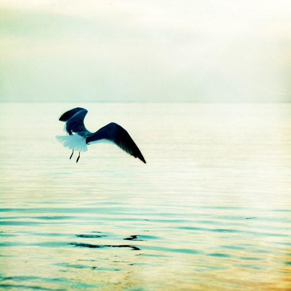 "Seagull Photography - bird coastal wall art - pastel teal green pale white - summer beach water - ocean nautical - 8x8 Print, ""Take Flight"" - CarolynCochrane"