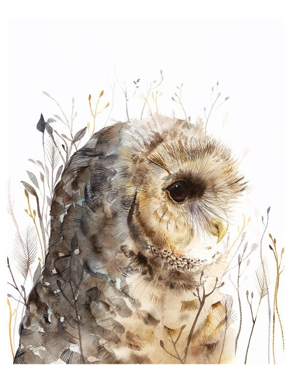 Owl art- Spotted Owl -print after original watercolor
