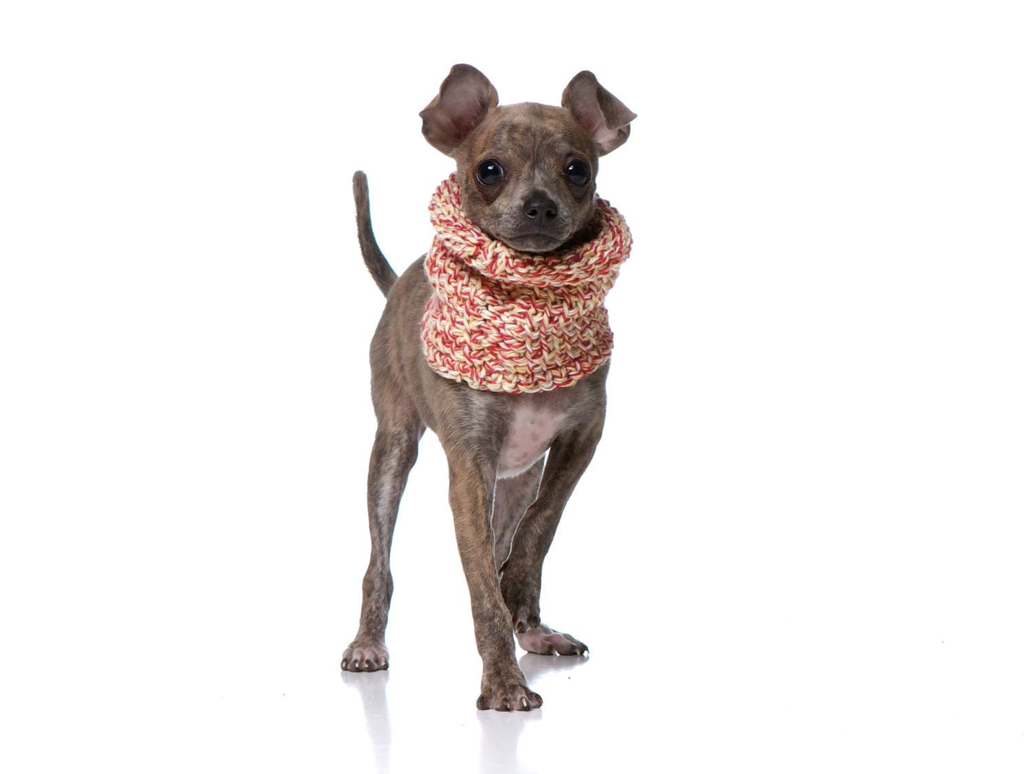 XS Peppermint Dog Cowl / Neck Warmer / Scarf / Sweater - CharlieHeartsDiesel