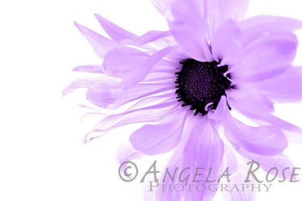 Purple Flower, Daisy, Fine Art Print, Floral Decor, Botanical, Floral Nursery Art, Girl Room, Pastel, Minimalist, Modern, 8x12 - AngelaRosePhoto