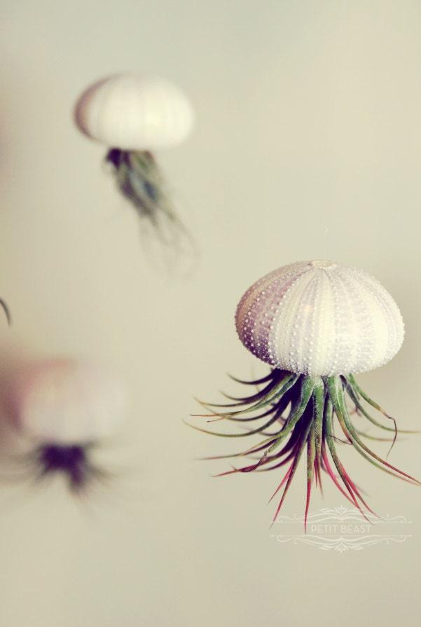 Five Stripey Jellyfish Air Plants // Sea Urchins Hanging Art Installation Wedding Favor Decor Terrarium Kit DIY tiny