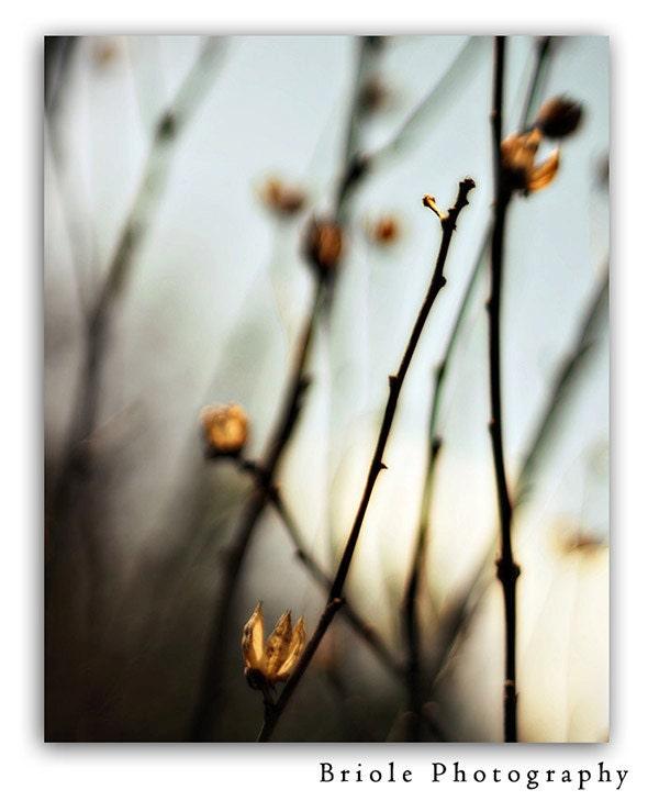 "Dreamy Winter Nature Photograph Fine Art 8""x10"" Photograph. Affordable Print. Soft Blues Steel Grays. - Briole"