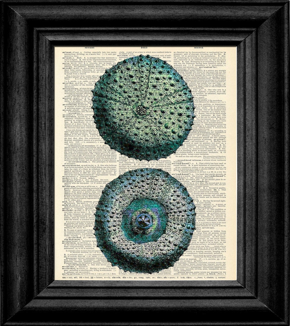 Teal Aqua Blue Sea Urchin Ocean Wildlife Dictionary Book Art Print 8x10 Size Free Shipping Item 195