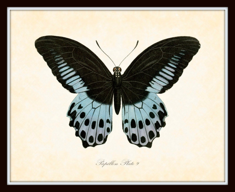 Vintage Butterfly Series 2 Papillon Plate 9 Art Print 8x10 Natural    Vintage Butterfly Print