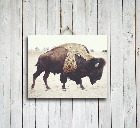 Bison - 16x20 buffalo print - brown home decor - buffalo - bison - rustic decor - brown decor - buffalo decor - western decor
