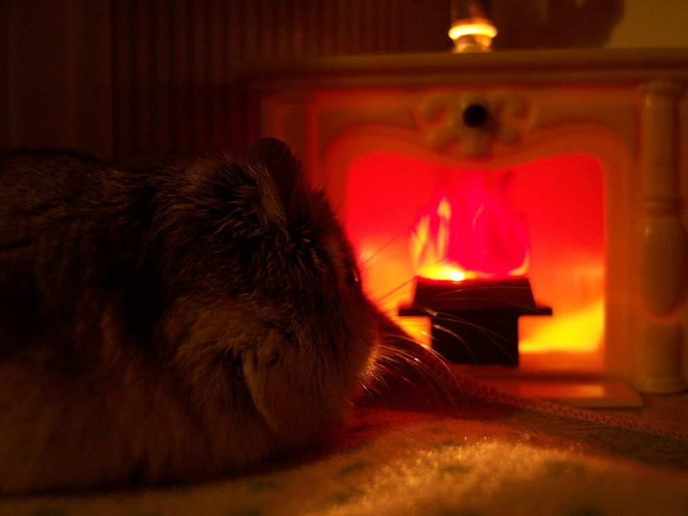 Hamster Fireplace Peace Card