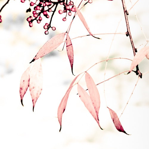 Soft Autumn Pink Leaves - 10 x 10 fine art photographic print - VivienneWard