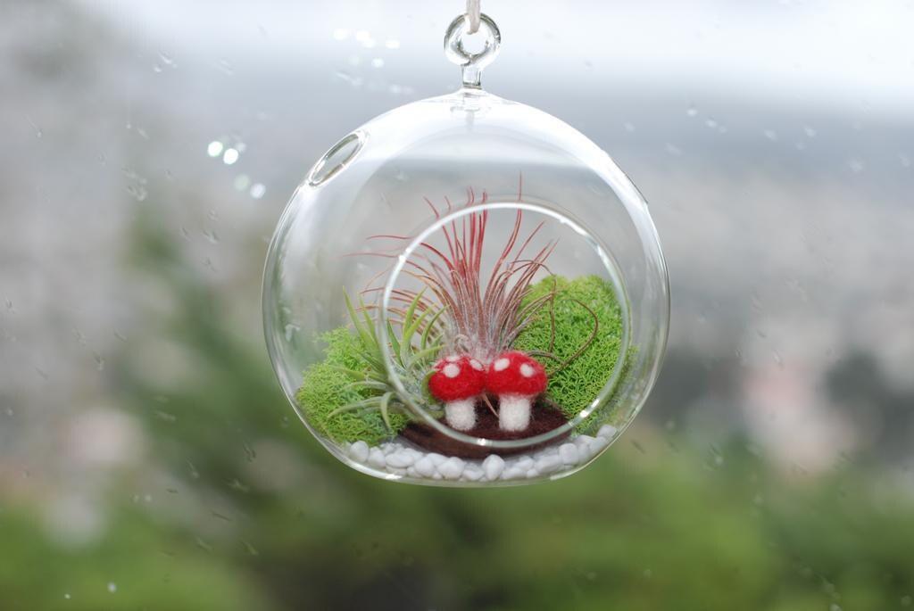 Whimsy-arium Mushroom Garden DIY Kit