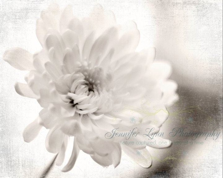 On Sale / Side Glances / IN STOCK / 5x7 Fine Art Photograph / black and white / daisy / flower / spring