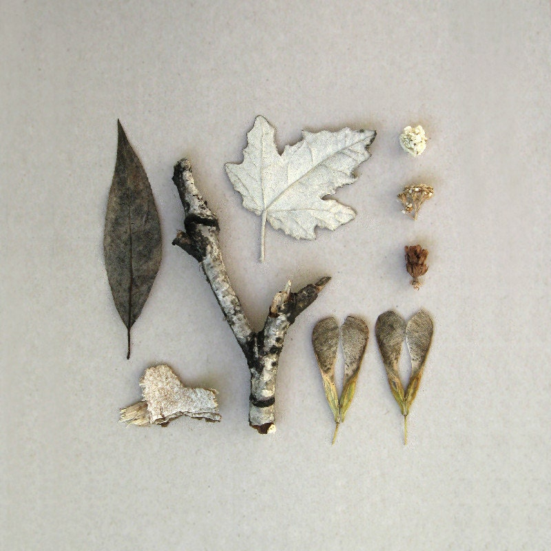 Winter woodland. Composition. Grey monochrome leaves. Nature. Rustic. Wall decor. 20x20cm ( 8x8inches ) - peraboom