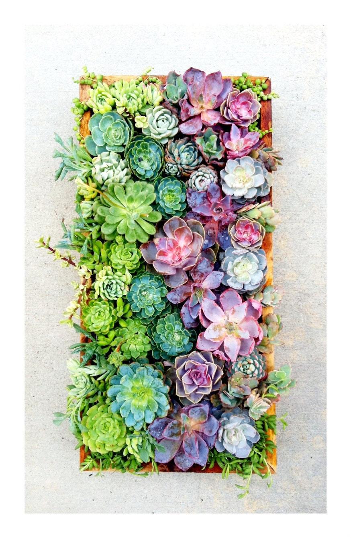 Succulent Wallpaper Tumblr 22500