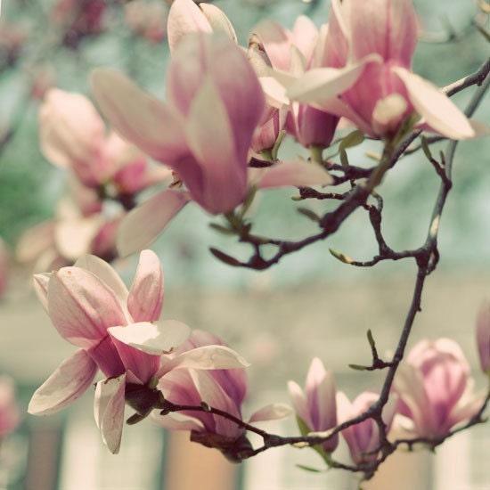 Цветочный фотография - фотография 5х5 желая цвести весной - пастельные розовый синий