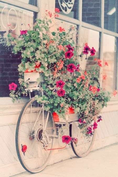 Потертый Chic Фотография - Прокат велосипедов Garden 4x6 Печать - пастельный розовый дача цветы подарок для нее в возрасте до 5