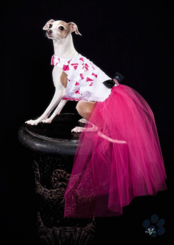 Grazia Couture собак платье