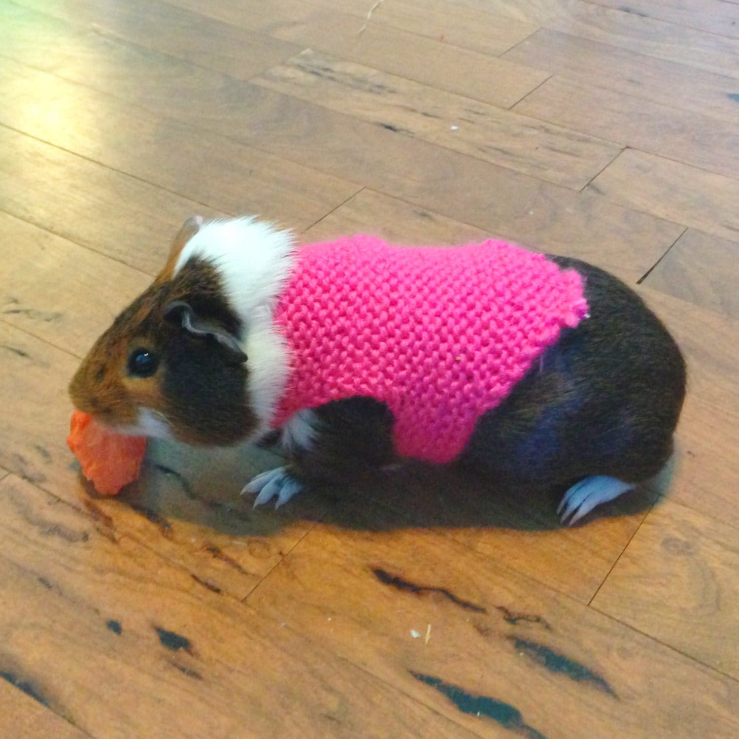 large guinea pig sweaters