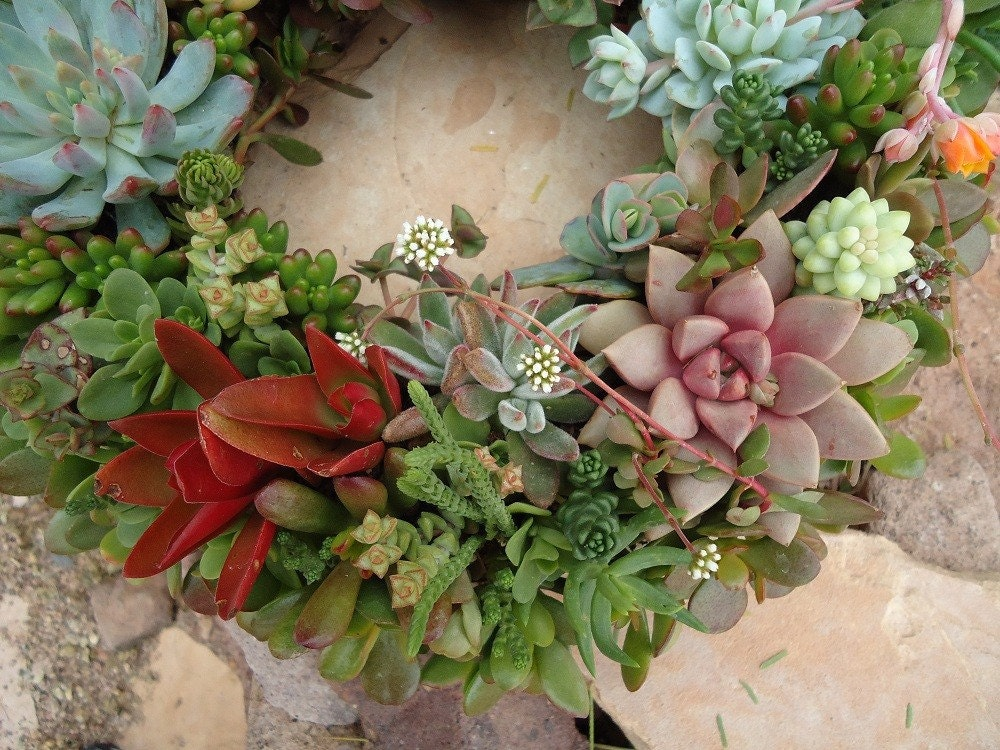 "Succulent Wreath, Featured in Birds and Blooms and Phoenix Magazines, Etsy Featured Seller, 12"" - SucculentDESIGNS"