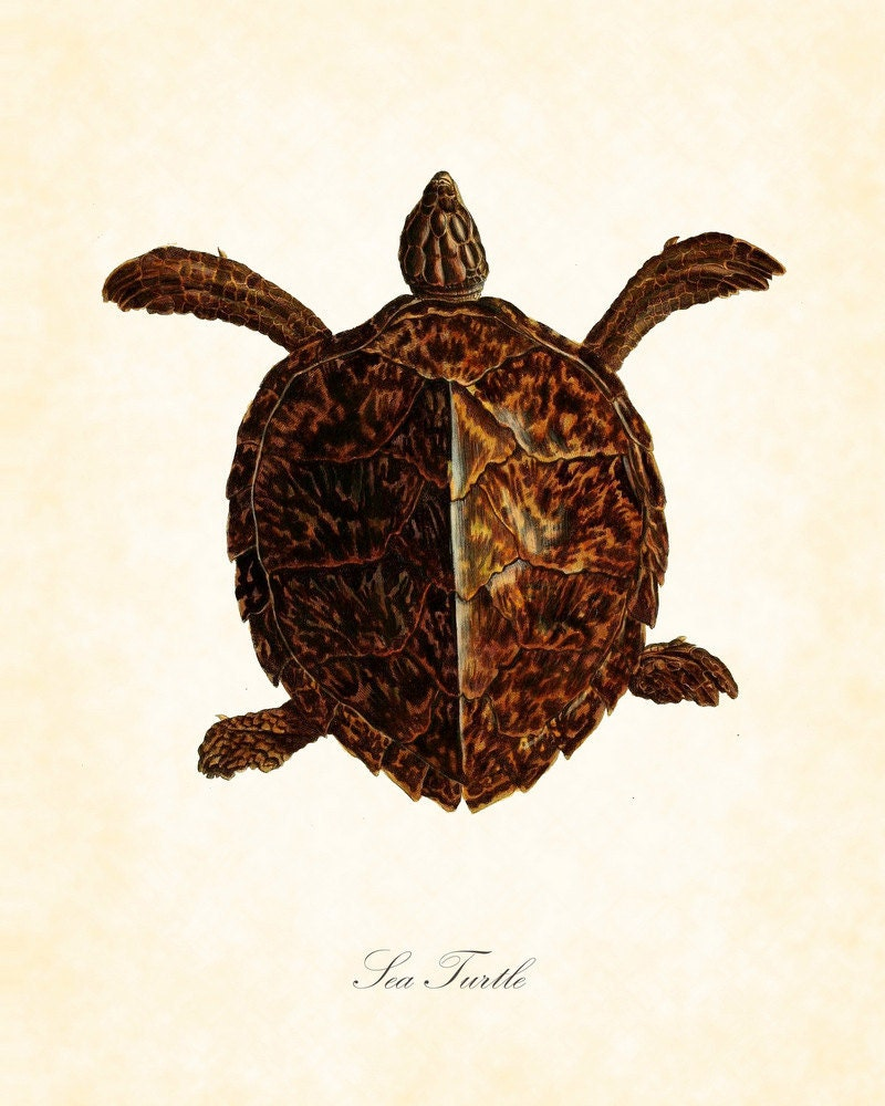 Vintage Sea Turtle Natural History Art Print 8 x 10 Original Collage - BelleMerGraphics