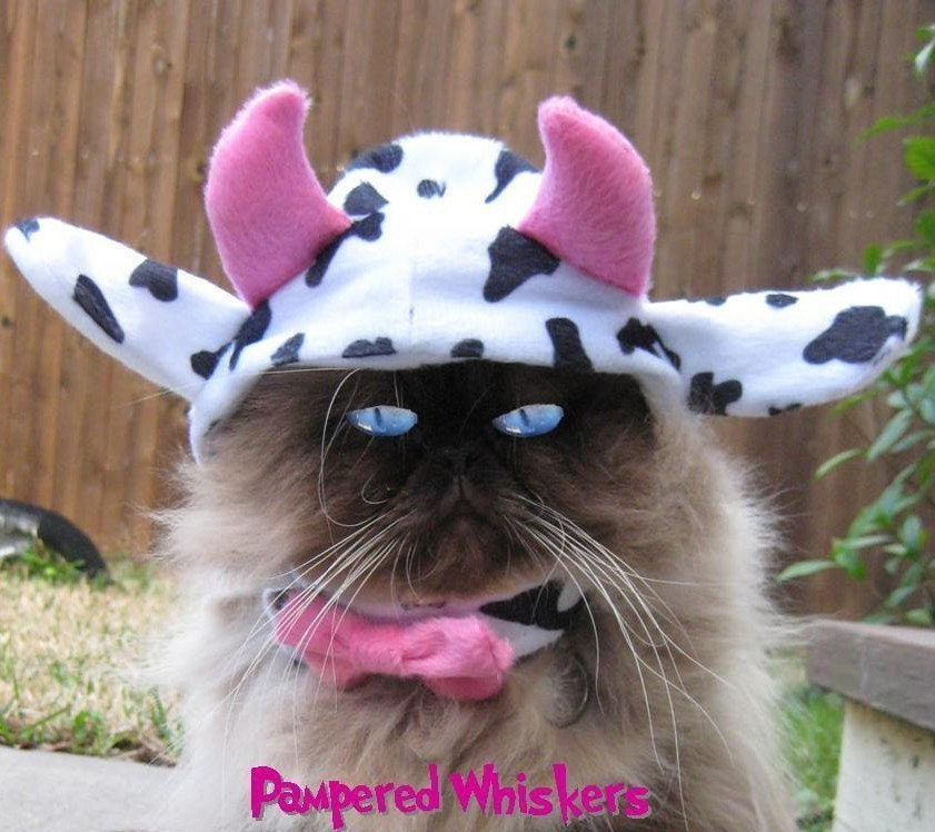 moo cow cat costume for halloween