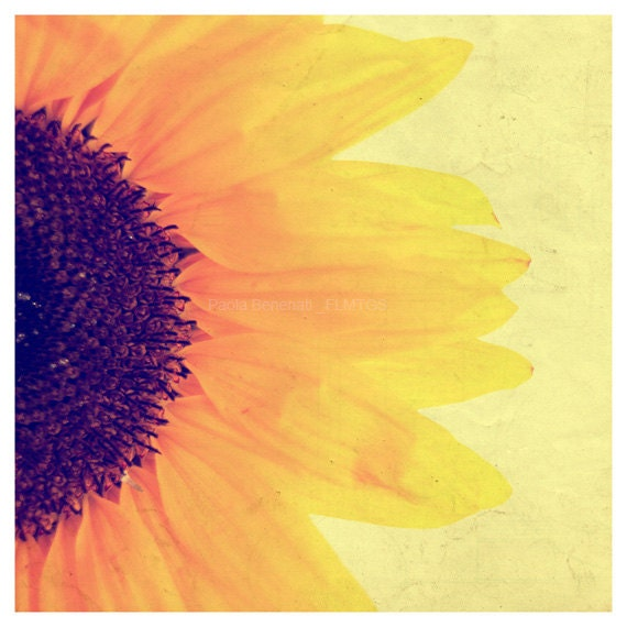 10x10 size. Sunflower photography. Home decor. - filamentoTGS