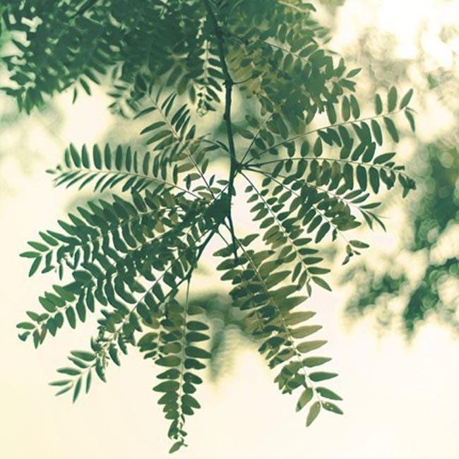 Spring Photography woodland wedding green leaf romantic shabby chic boho