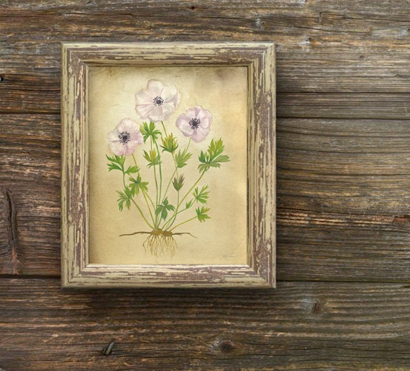 "Rustic Anemone Flowers Print 8""x10"" - Rustic Flower Wall Art, Botanical Artwork, Lavender Flowers Art - calamaristudio"