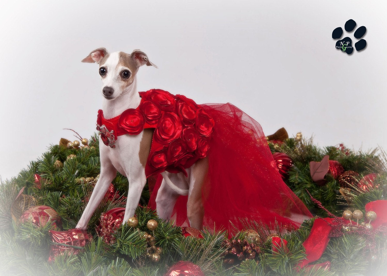 Леди в красном шелковые и атласные платья Розетка собак