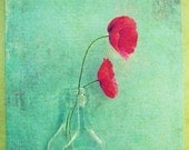 "Two red poppies vintage glass bottle aqua blue teal Poppy flower photo romantic sweet  ""Loves language"" - 8x10 Fine Art Photograph"