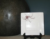 Square Black Widow Spider Appetizer Dessert Plate--Set of 4