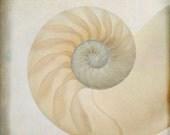 nautilus ... ocean sea shell spiral photograph modern beach decor print with calming neutral color