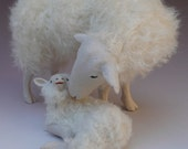 Dutch Kempen Heath Sheep Snuggling
