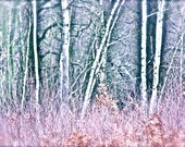 Winter Woods Photography - Pastel Photograph - 8 x 10 Print
