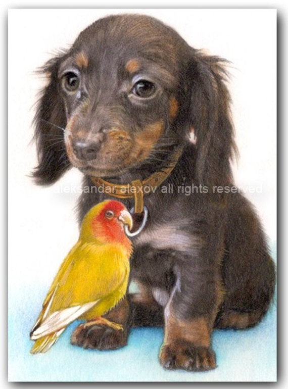 Print -The Duchshund Dog Puppy and the Parrot