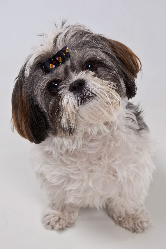 Собака Волосы Луки - Хэллоуин