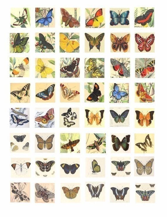vintage 100 year old 1800s butterfly butterflies moth engravings clip art