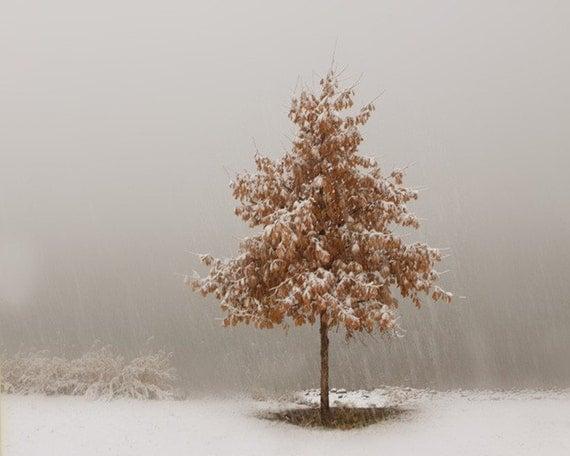 Silver White  Snow Art Photograph Winter Landscape Photography 8x10 Fine Art Photograph