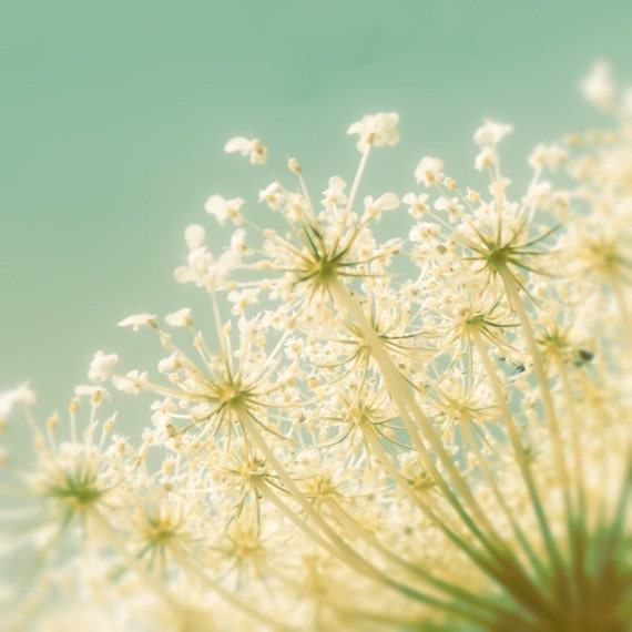 Flower photography nursery decor nursery art flower print queen annes lace pale yellow pale green Print Popcorn 8x8 30% OFF SALE
