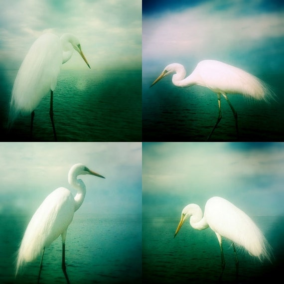 Bird Photography Heron White Egret Bird Photo Print Set 4x4 Nature Beach Ocean Wall Decor
