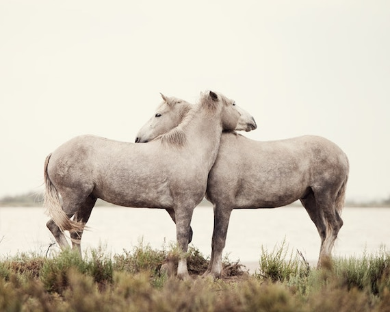 Valentine, Embrace - Nature Photograph, Valentine's Day, White Horses, Horse Photography, Wall Decor, Nursery Art, Baby's Room