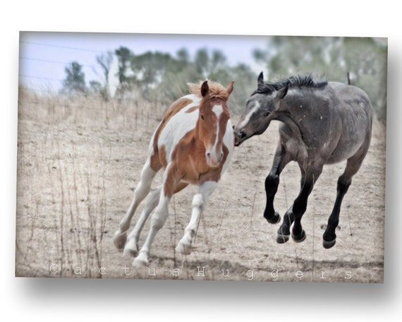 Horse Art Photography art print ranch Tucson cowgirl Photograph southwest photo cowboy Arizona 8x12