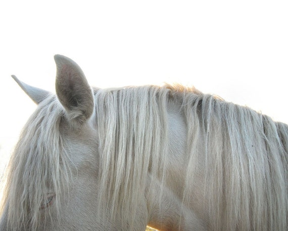 White mane - horse photograph -  pale grey - home decor wall art - 8 x 10 fine art print gbrosseau