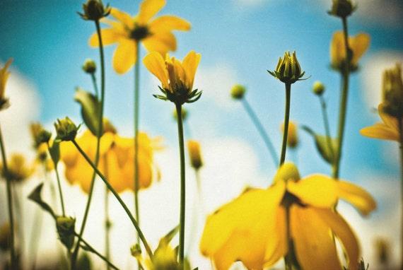Златовласка - золотисто-желтый цвет фотографии.  причудливые фотографии природы.  питомник декора.  искусство комнате Чайлдс.  современный декор дома