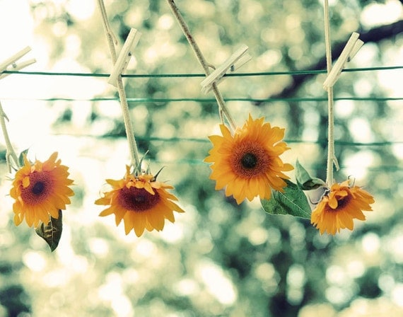 Flower Photography - Sunflower On the Line Print 5x7 Nature Print - yellow orange green flowers hanging