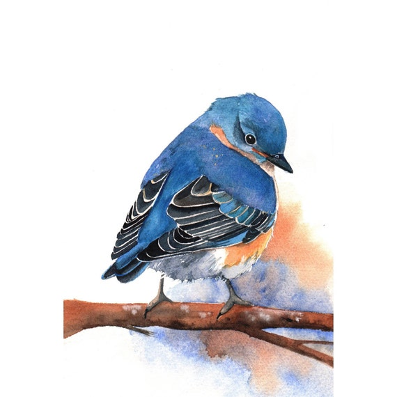 Bluebird Painting -B029-  Archival Print of bird watercolor painting 5 by 7