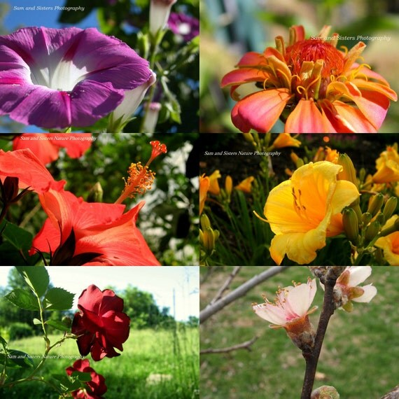 COLORFUL FLOWERS Photo cards set of 6 blank cards