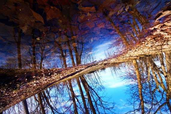 Upside Down Forest, Fine Art Photographic Print - 8x12
